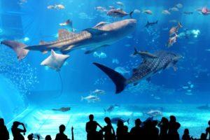 水族館デートつまらない理由を考える